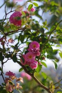 Beautifully kept garden at La Maison